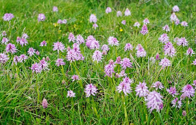 Orkide_vandring_med_maggan_norra_cypern_magasinet_blommor_