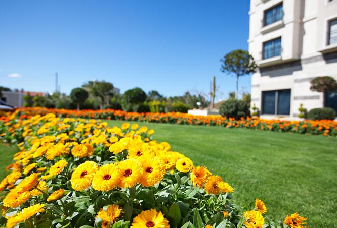 garden north cyprus