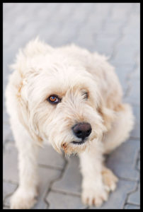 nort-cyprus-homless-dog