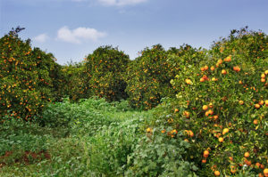 orange north cyprus
