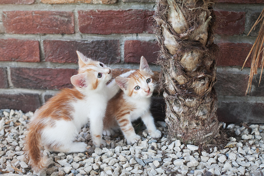 north-cyprus-Help-for-stray-cats
