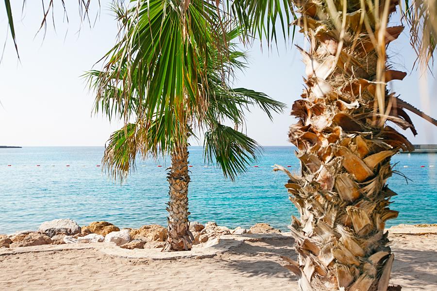 dagens-bild-strand-beach-palm-trees-north-cyprus