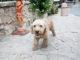 north-cyprus-bellapais-dog-gata