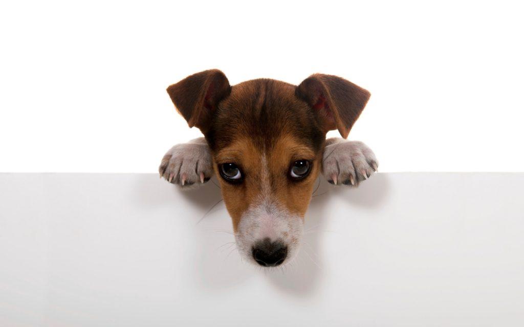 dog-cute-puppy-north-cyprus