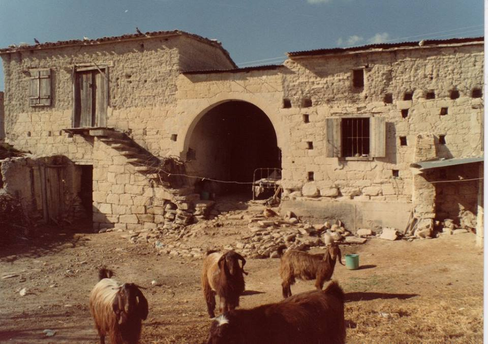 Our-cyprus-old-house-goats