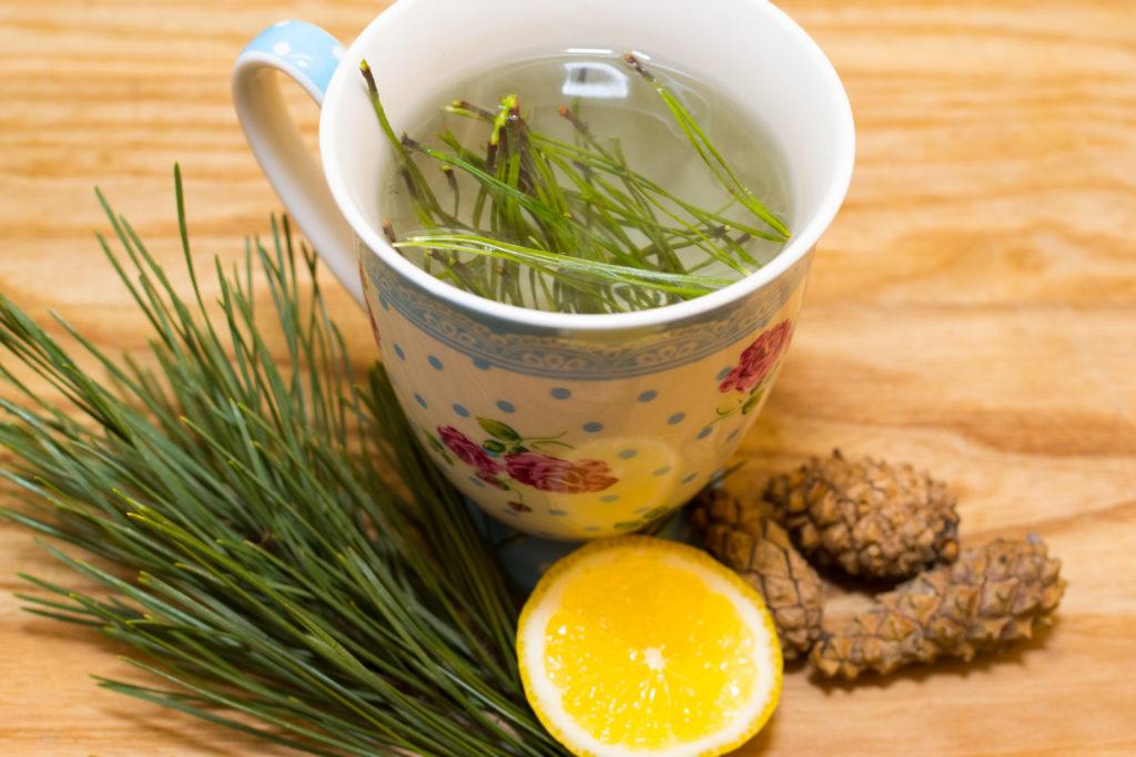north-cyprus-Pine-Needle-Tea
