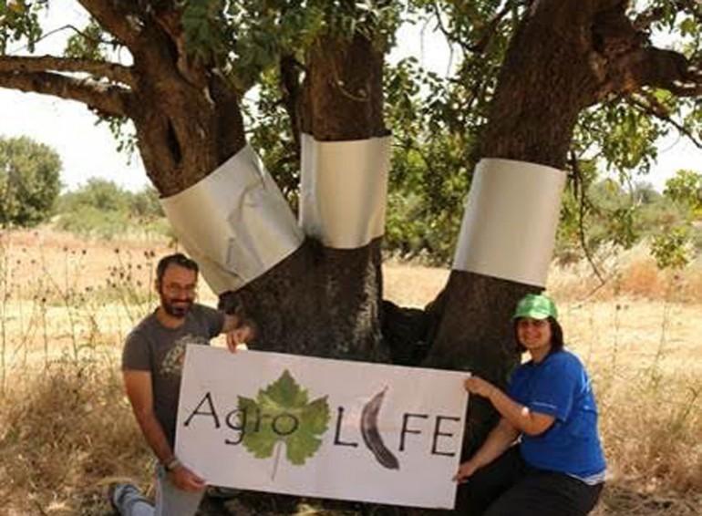 carob-trees-green-project-cyprus