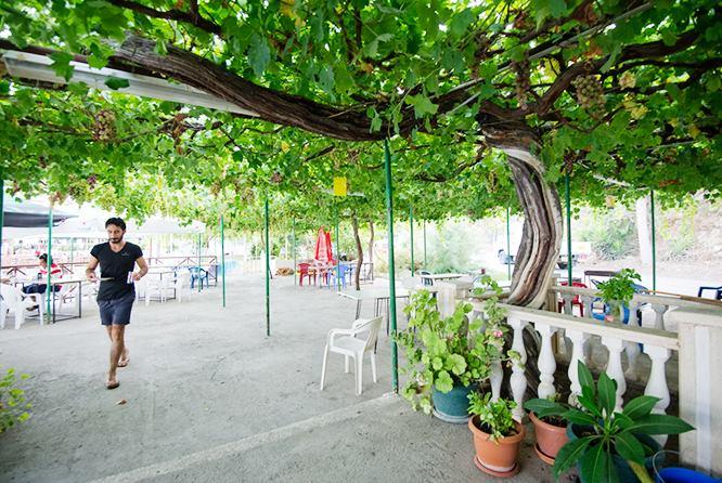 Yesilirmak-Cyprus-largest-grapevine