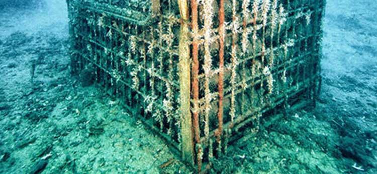 aquoir-Yeroskipou-artificial-reef