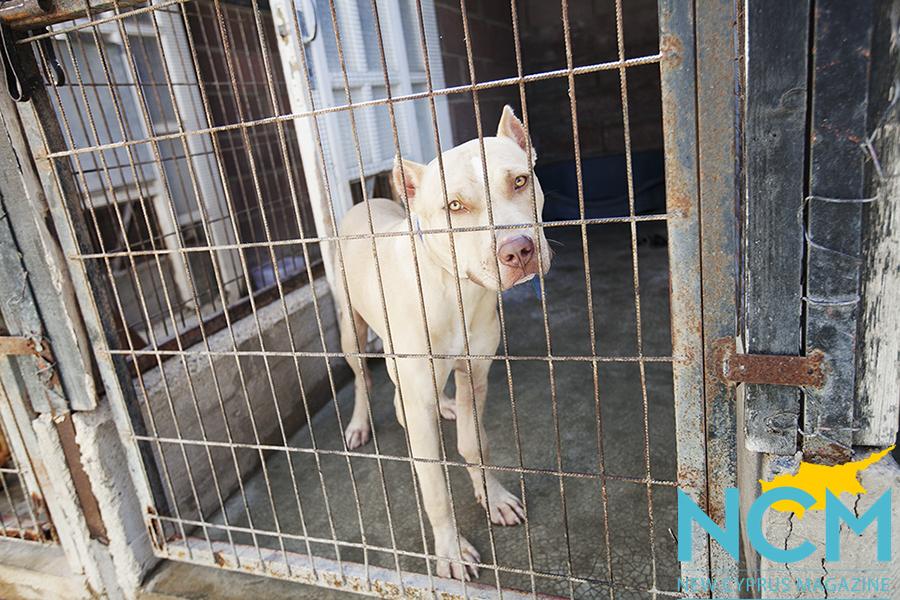 White dog with sad eyes