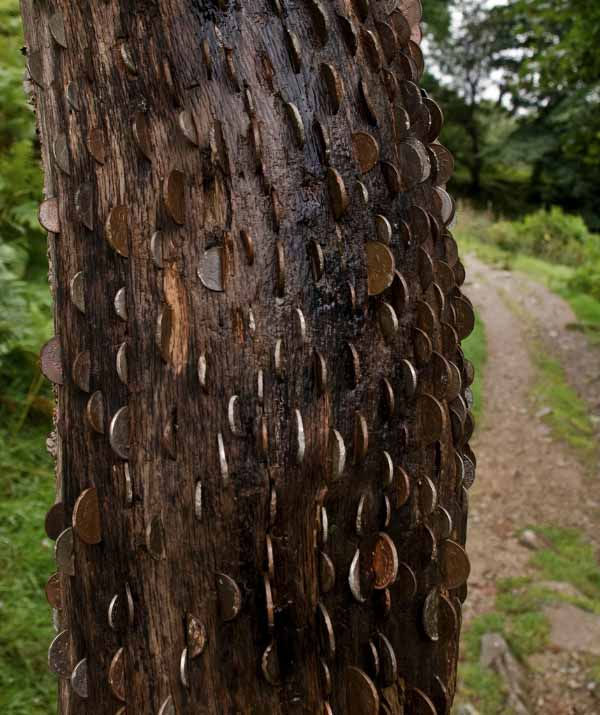 money-tree-UK-good-luck