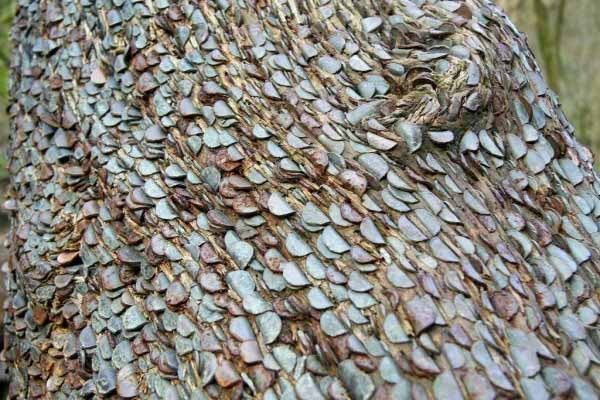 north-cyprus-trees-covered-in-money-1