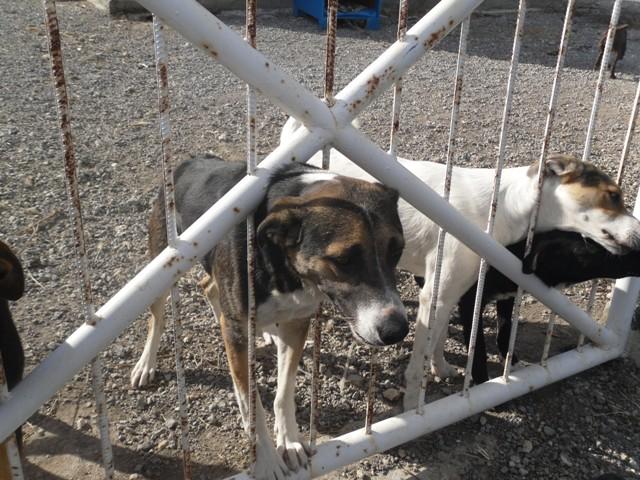 Girne's temporary dog shelter