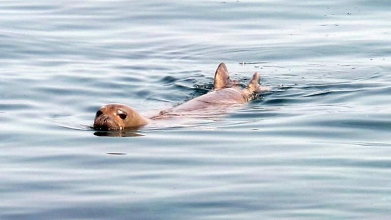 Monk seals in Cyprus