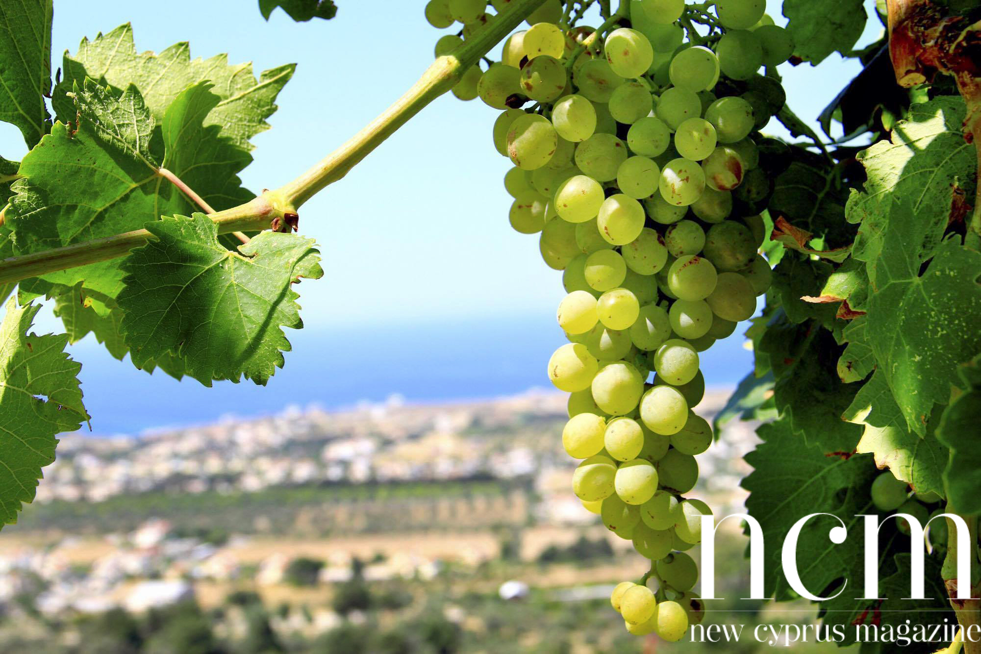 Grapes with a view