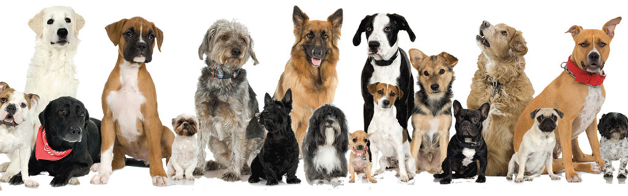 Dog registrations