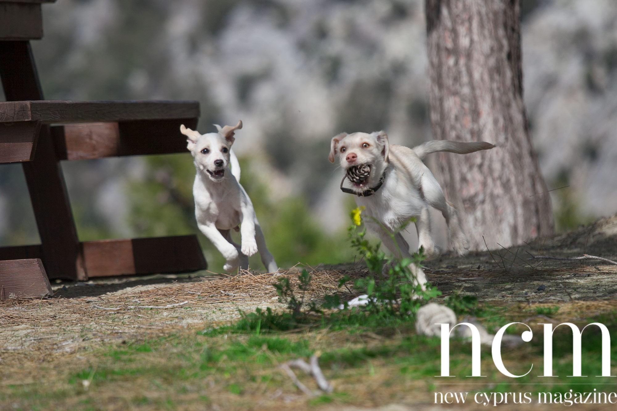 Dogs running at Kozan nature experience