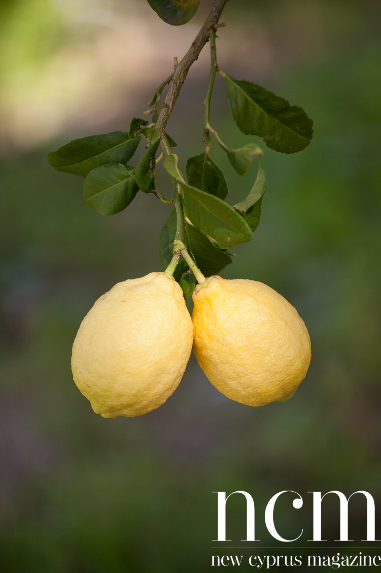 Two lemons at Kozan nature experience