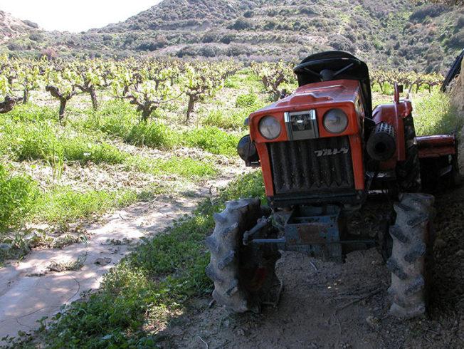 Cyprus' vineyards quality wine