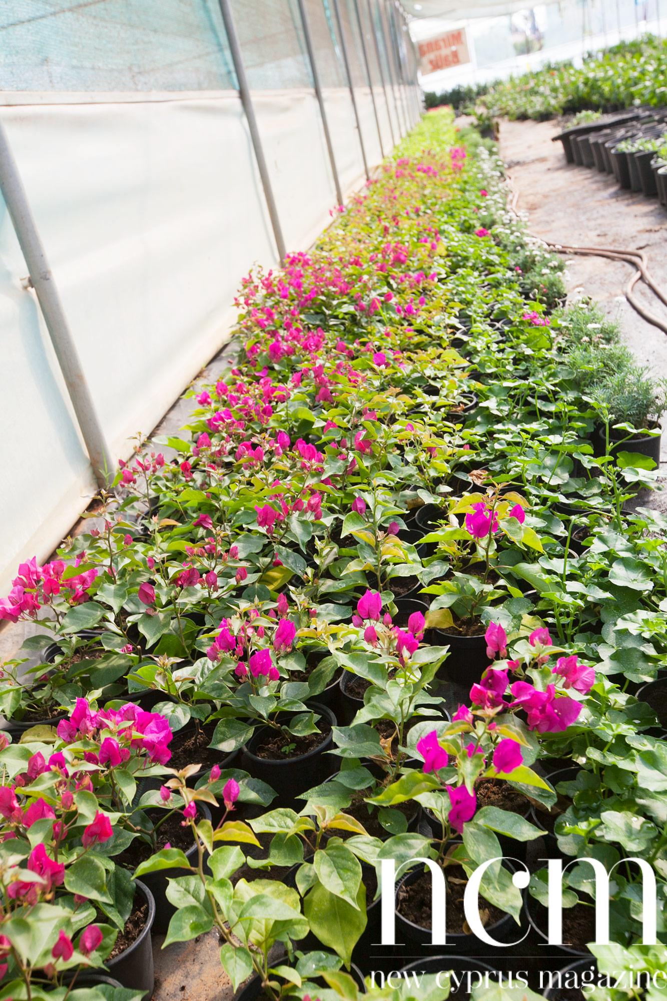 Florist Flower Garden North Cyprus